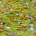 Party At Kaloya Pond by Darrel Giesbrecht