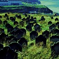 Passed Or Past Residents Of Whitby, Yorkshire by Marcus Dagan