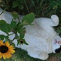Passed Out Under The Daisies by Marna Edwards Flavell