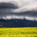 Passing By - Storm Passes By Lone Tree In Western Nebraska by Southern Plains Photography