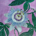 Passion Flower by Melina Mel P