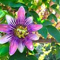 Passion Flower Vine by Wonju Hulse