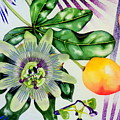 Passion In The Tropics by Margaret Elizabeth Johnston ND