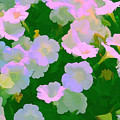 Pastel Flowers by Tom Prendergast