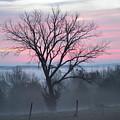 Pastel Fog by Cathy Christian