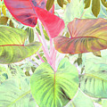 Pastel Hearts by Robert McPeek