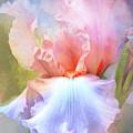 Pastel Iris Pleasure by Regina Geoghan