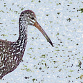 Pastel Limpkin by Mike Mullins