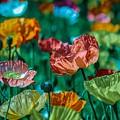 Pastel Poppies On Blue Haze by Joy of Life Art Gallery