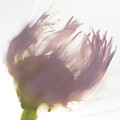Pastel Purple Flower by Michelle Himes