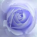 Pastel Purple Rose Flower by Jennie Marie Schell