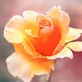 Pastel Rose by Terry Davis