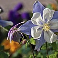Pastel Spring Flowers by Tatiana Travelways