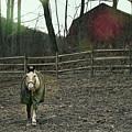 Pasture Pony by JAMART Photography