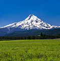 Pasture View Of Mt. Hood by John Trax