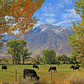 Pasture With A View by Donna Kennedy