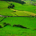 Pastures In The Azores by Gaspar Avila