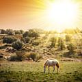 Pasturing Horse by Carlos Caetano