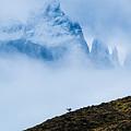 Patagonia Guanaco by Walt Sterneman