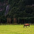 Patagonia Pasture by Walt Sterneman