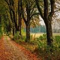 Path Along The Horses Meadow On The Farm Lovedayvale L A S by Gert J Rheeders