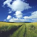 Path In A Countryside by Bernard Jaubert