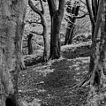 Path In Crownest Woods by Philip Openshaw