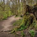 Path In Judy Woods by Mike Walker