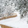 Path In Snow by Nicola Simeoni