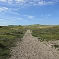 Path In The Noordhollandse Duinreservaat by Chani Demuijlder