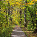 Path In The Woods During Fall Leaf Season by Jill Lang