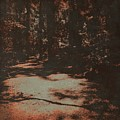 Path In The Woods by Judith Kitzes