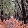 Path In The Woods by Kurt Von Dietsch