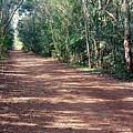 Path Into The Jungle by Silvana Miroslava Albano
