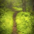Path by Joye Ardyn Durham