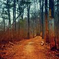 Path by Lilia D