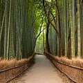 Path Through A Bamboo Grove In Kyoto by Ei Katsumata