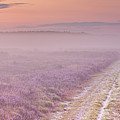 Path Through Blooming Heather Near Hilversum, The Netherlands by Sara Winter