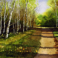 Path Through Silver Birches by Paul Dene Marlor