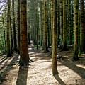Path Through The Woods. by Elena Perelman