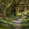 Path Through Yeats' Fairy Forest by James Truett