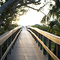 Path To Marco Island Beach by Susan Stone