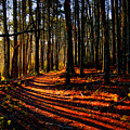 Path To Serenity - Nickerson State Park by Dianne Cowen