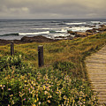 Path To The Sea by Maria Coulson