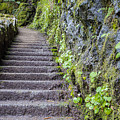 Path To The Top by John McGraw