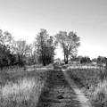 Path Yet Taken by Jack Norton