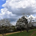 Pathway Along The Dogwood Trees by Hughes Country Roads Photography