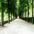 Pathway by Deborah  Crew-Johnson