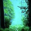 Pathway In The Forest by Derek Rutt