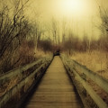 Pathway by Jeanmarie Shelton